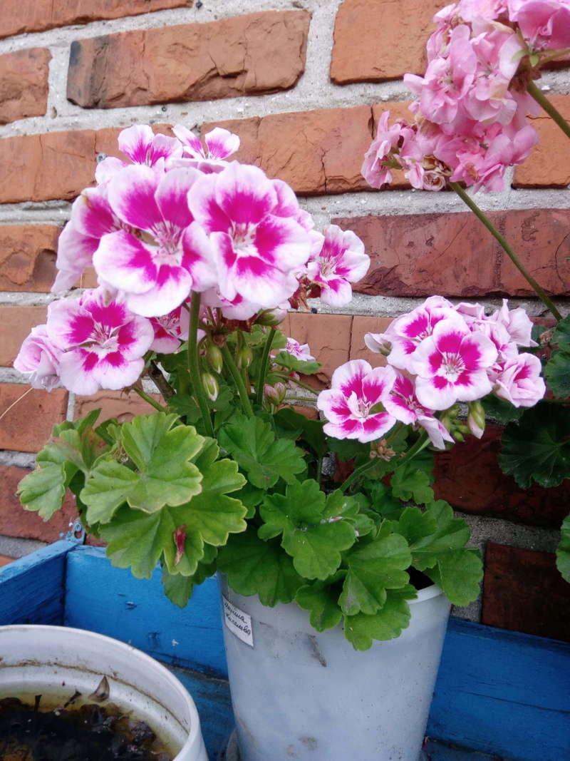 Моё цветочное богатство - Страница 32 Image310