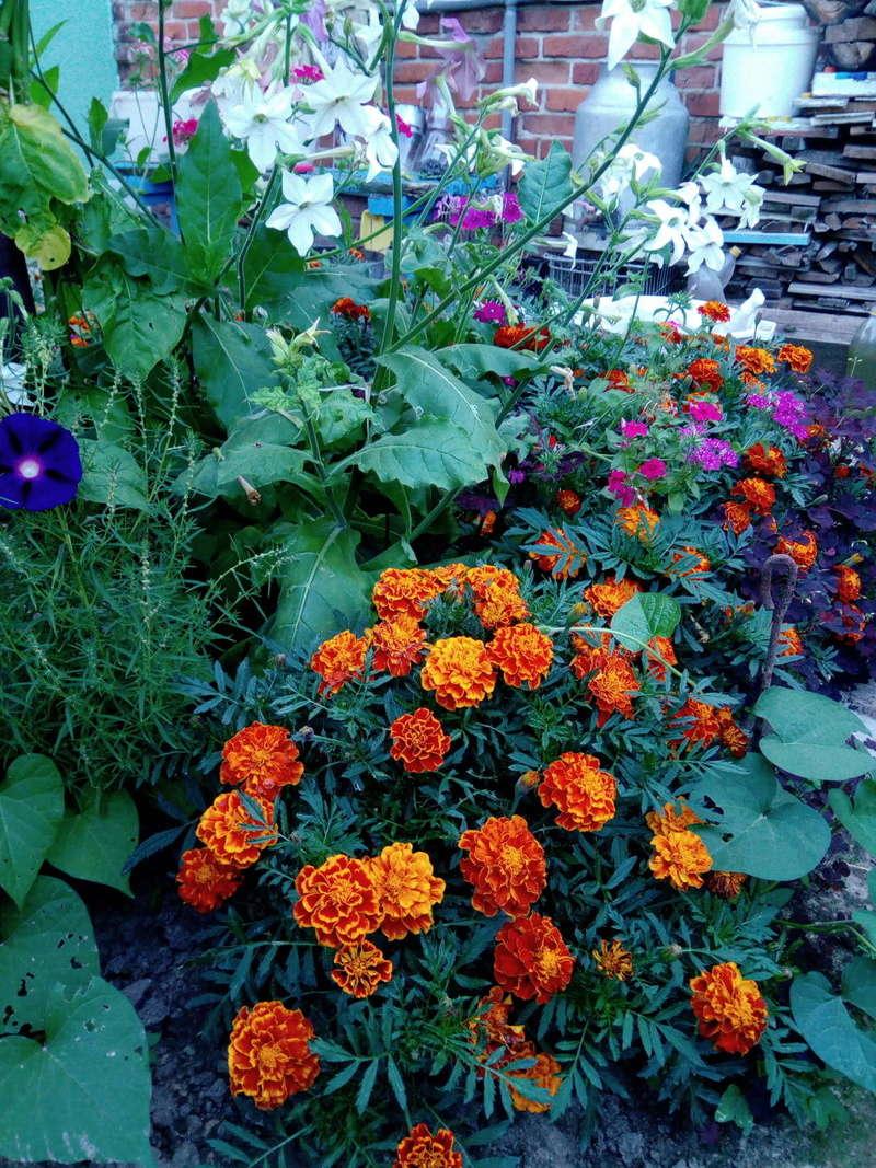 Моё цветочное богатство - Страница 32 Image710