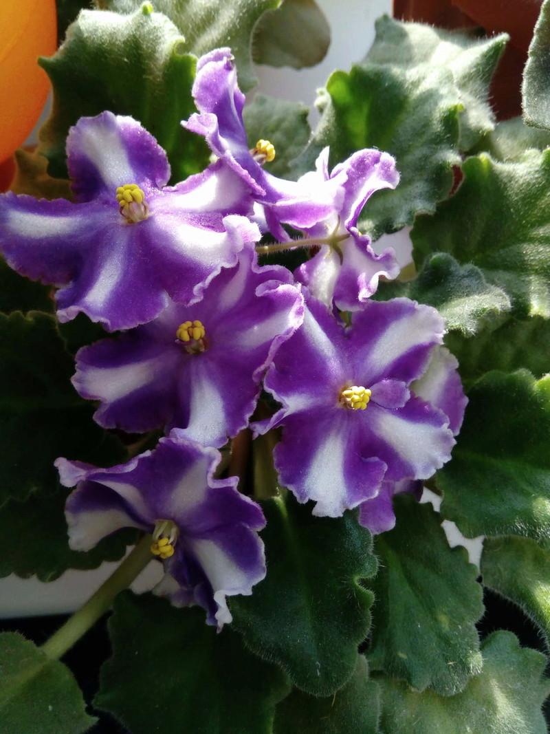 Моё цветочное богатство - Страница 32 Image911