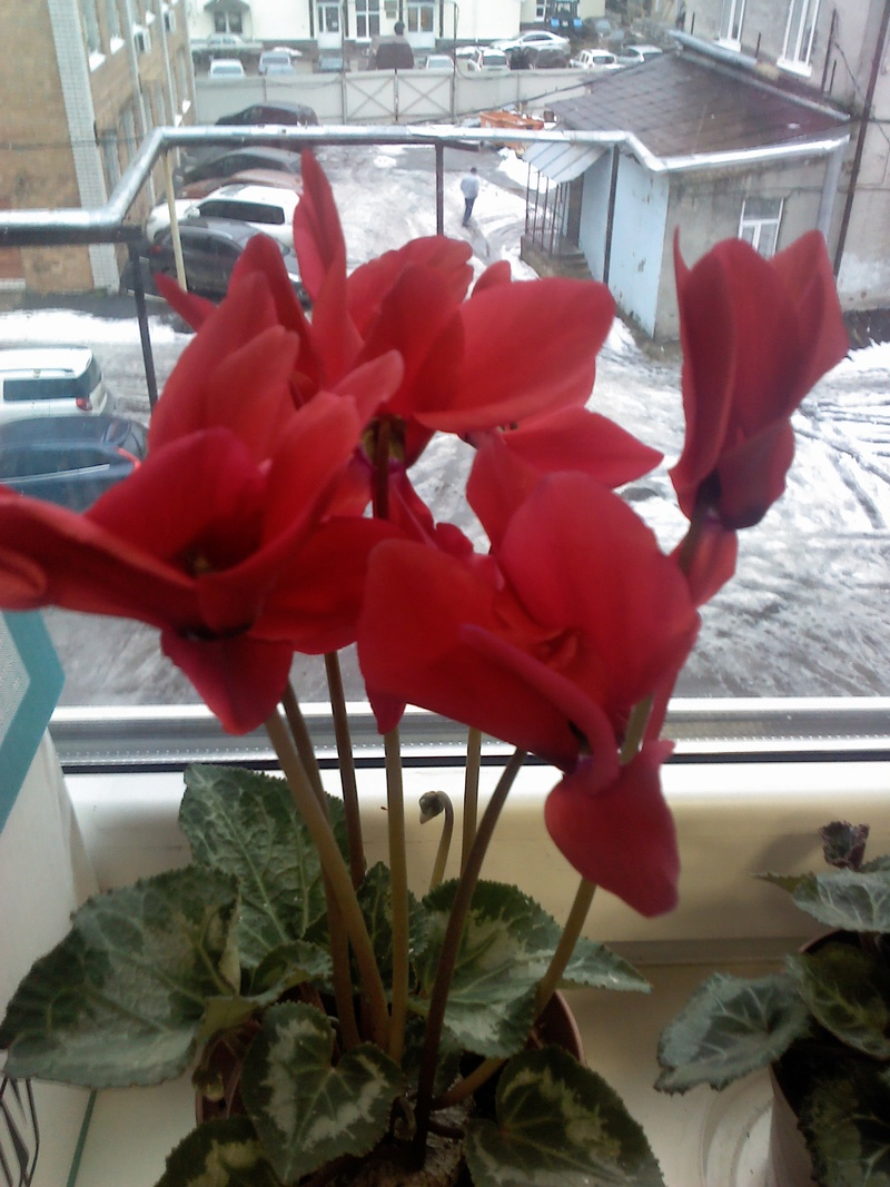 Моё цветочное богатство - Страница 32 Img_2011