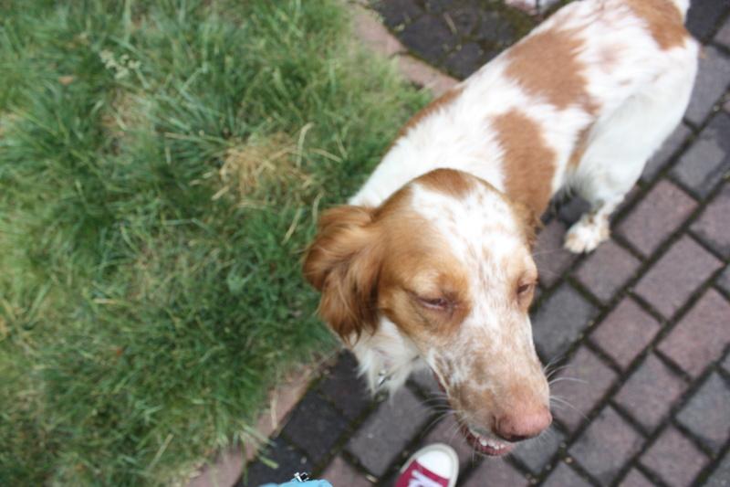Bildertagebuch - Nela: wünscht sich einen kuschligen Hundekorb, einen vollen Futternapf und liebe Menschen - VERMITTELT! Img_3911
