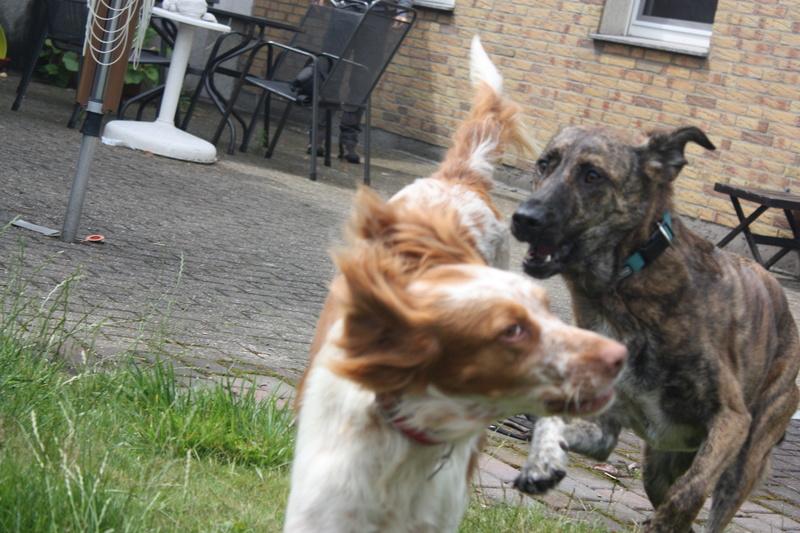 Bildertagebuch - Nela: wünscht sich einen kuschligen Hundekorb, einen vollen Futternapf und liebe Menschen - VERMITTELT! Img_3918