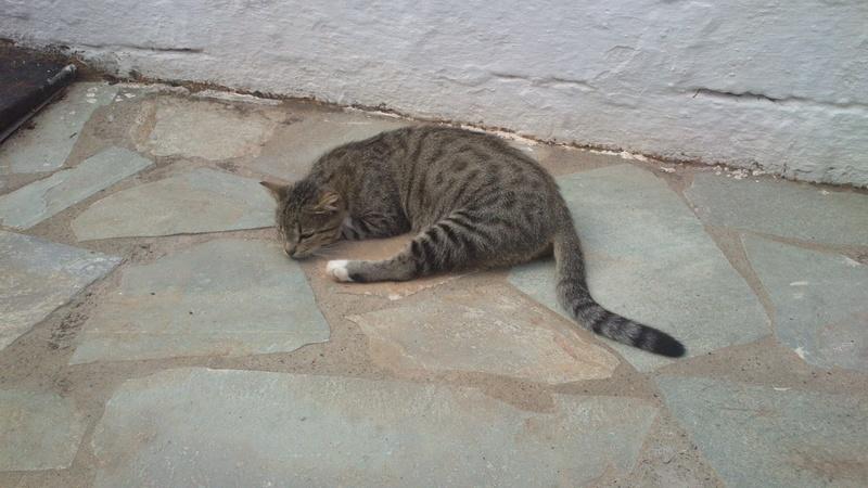 Γάτα Χωριού Dsc_7710