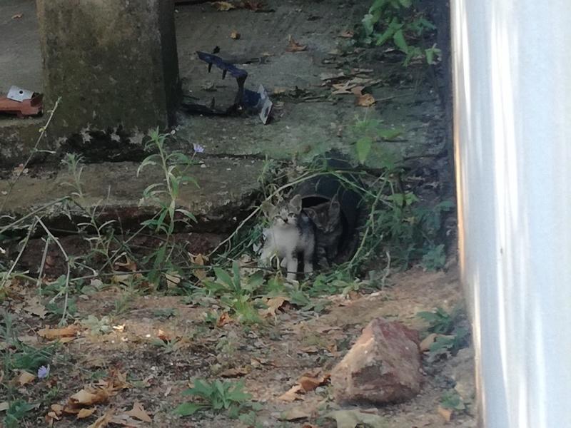 Γάτα Χωριού Img_2012