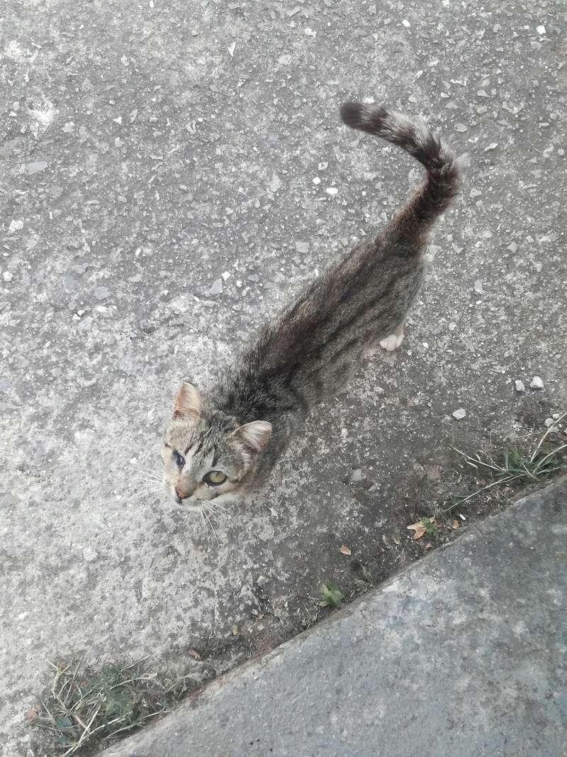 Γάτα Χωριού Img_2013