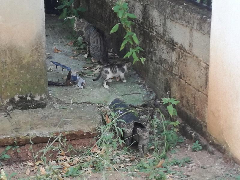 Γάτα Χωριού Img_2020
