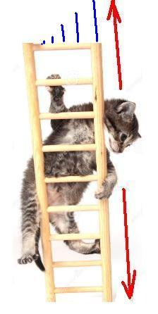 Mola maluca desafia a gravidade Gato10