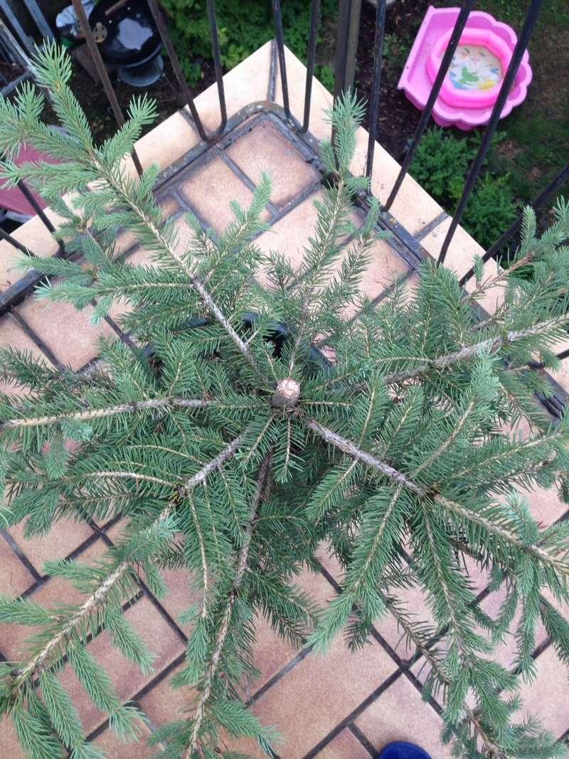 Ayuda con este pino de navidad Whatsa15