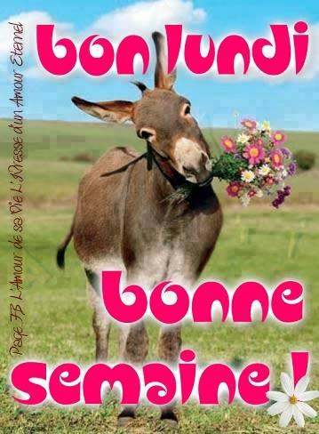 Bonjour /bonsoir de Septembre - Page 5 Lundi_10