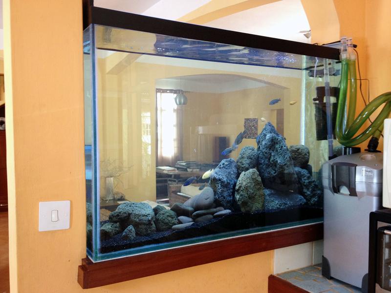 Bac 350 litres, 70cm hauteur d'eau. Cichlidés Africains Img_6512