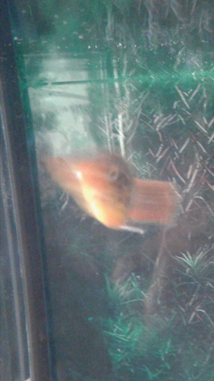 Anybody ever see this fish disease?? Pics included. Plz help!  Screen15