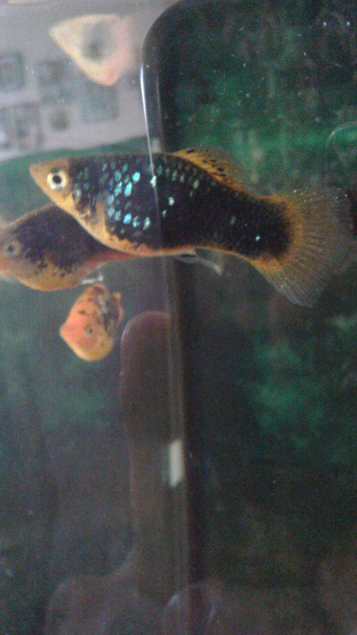 Anybody ever see this fish disease?? Pics included. Plz help!  Screen17