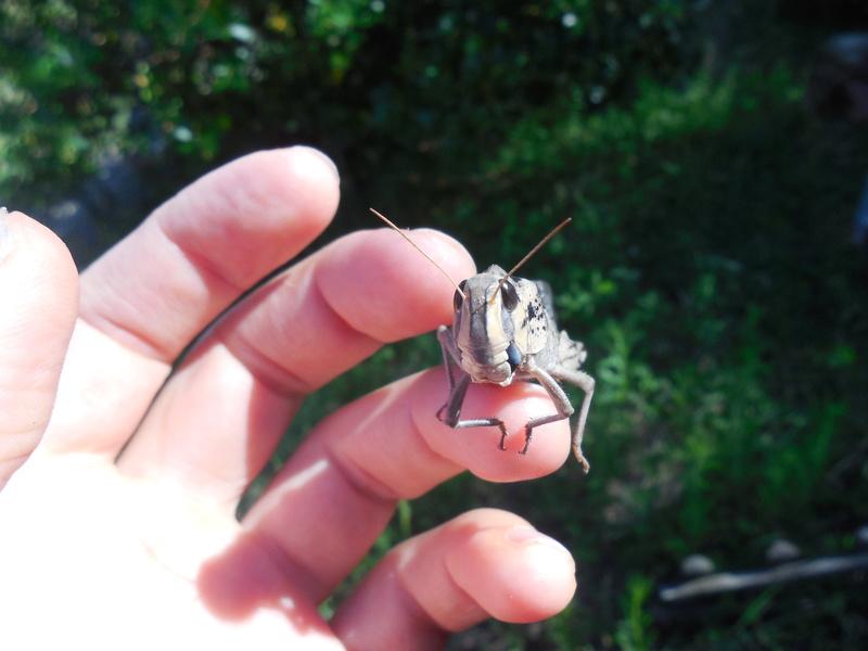 Sauterelles trouvées dans le jardin de ma grand-mère Dscn3714
