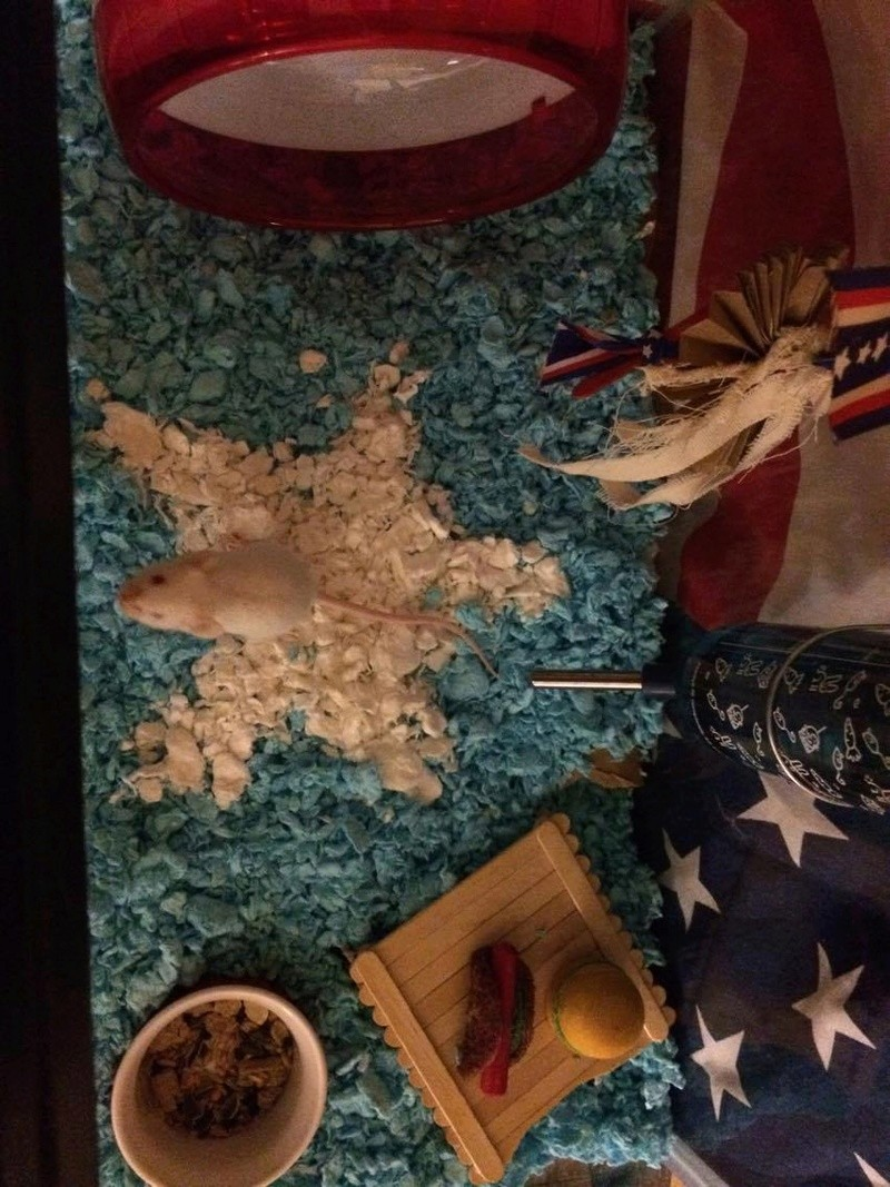 HAPPY 4th OF JULY from Napoleon <3 19720510