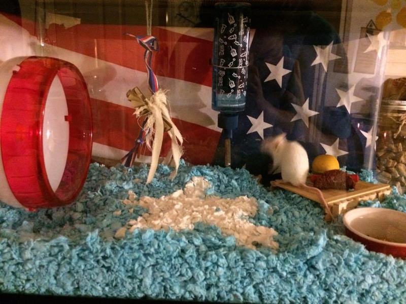 HAPPY 4th OF JULY from Napoleon <3 19749410