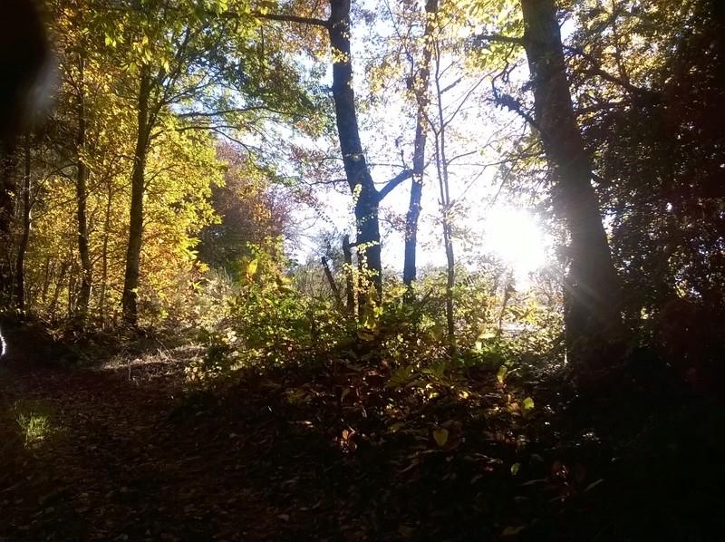 Photo dans la forêt  Wp_20112