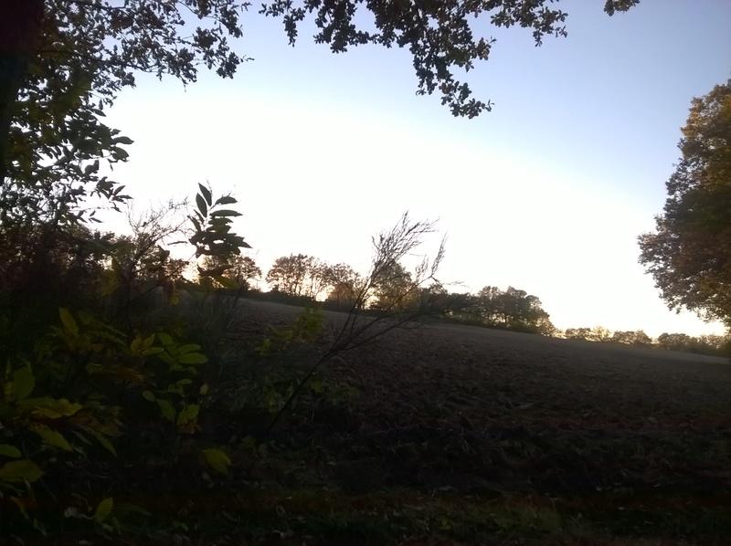 Photo dans la forêt  Wp_20113