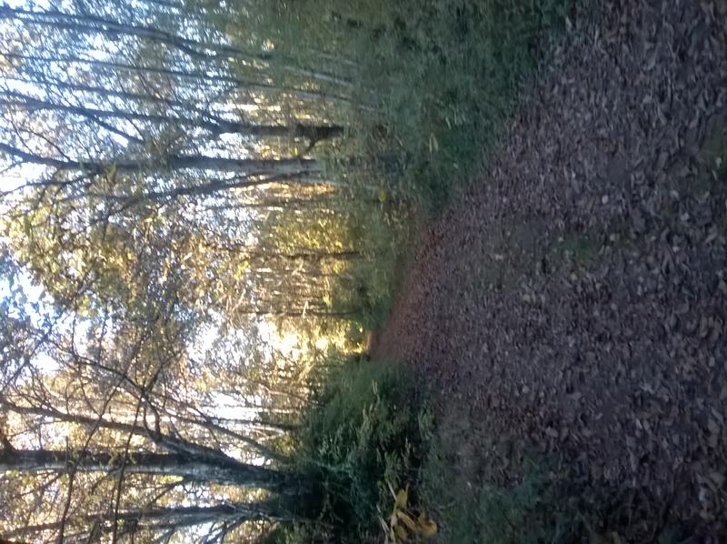 Photo dans la forêt  Wp_20114