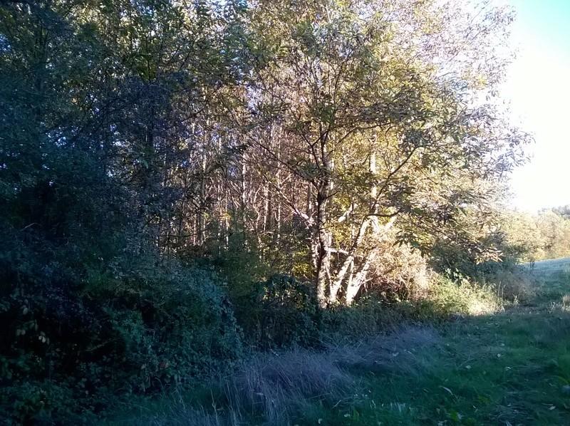 Photo dans la forêt  Wp_20116