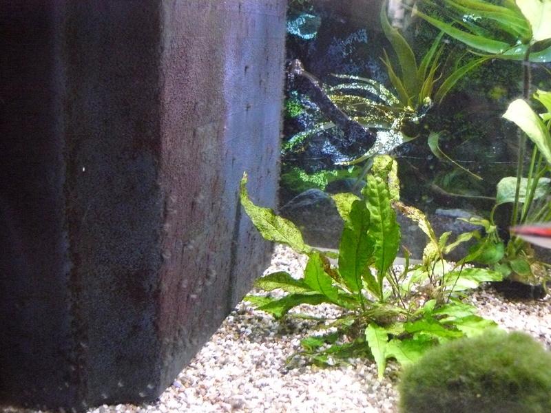 Problème algues pinceaux P1080312