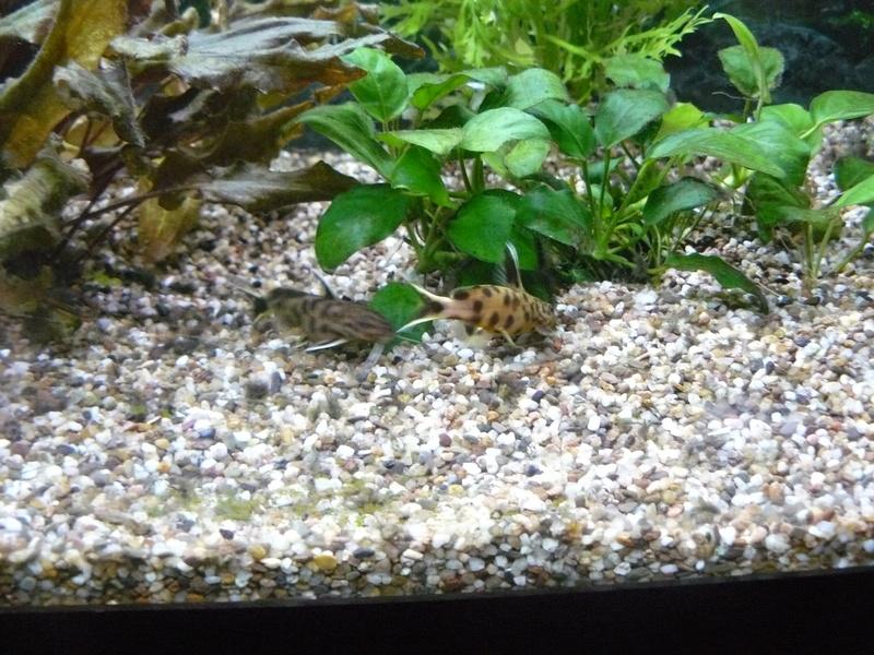 Problème algues pinceaux P1080414