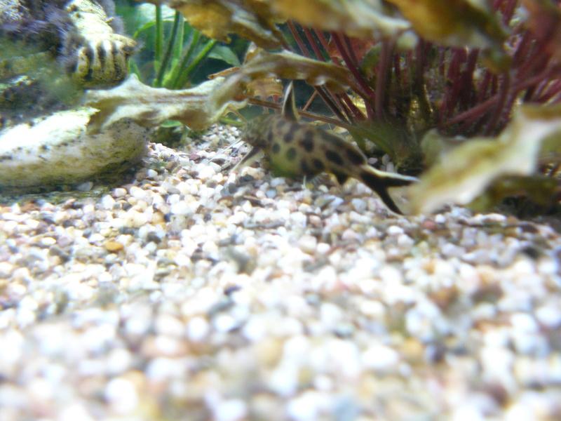 Problème algues pinceaux P1080416
