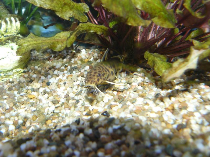 Problème algues pinceaux P1080417