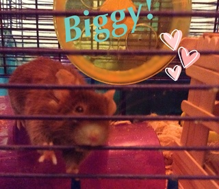Pictures Of Biggy Image14