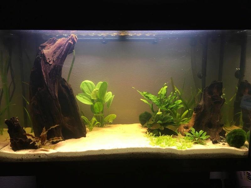 aquarium 125L amazonien  19718710