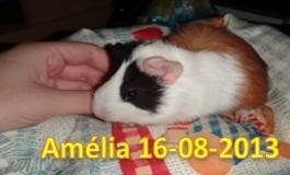 Apresentação: Amélia e Babi Amylia10