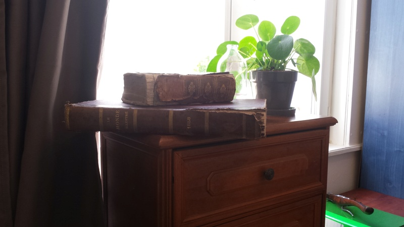 Comment arrosez vous vos succulentes et cactus????? 20170810
