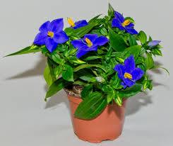 Quelle est cette plante? Tylych10