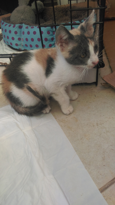 Χαρίζεται γλυκό γατάκι Kassi110