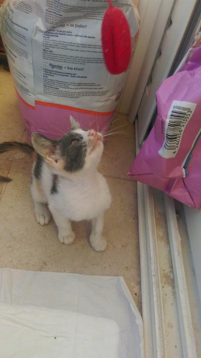 Χαρίζεται γλυκό γατάκι Kassi210