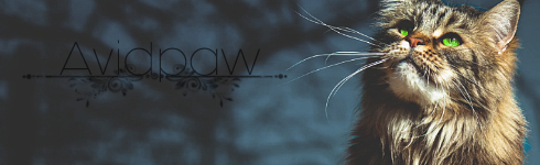 \\KITTEN SEARCH\\ SNOW X GLOW - Pagina 8 Avidos10