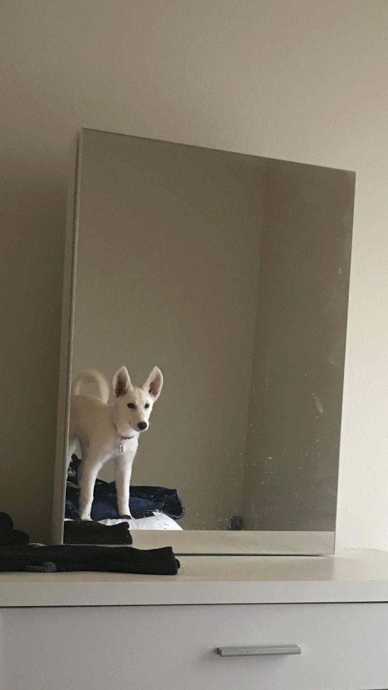 Is she a Siberian Husky? Img_2012