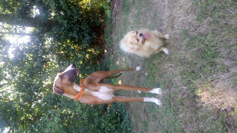 Goby et Melian Dsc_0811
