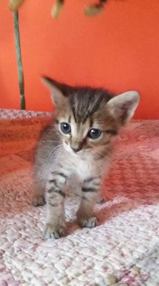 Ορφανά γατάκια που γλύτωσαν από φόλα! Υιοθετήθηκαν Ioz10
