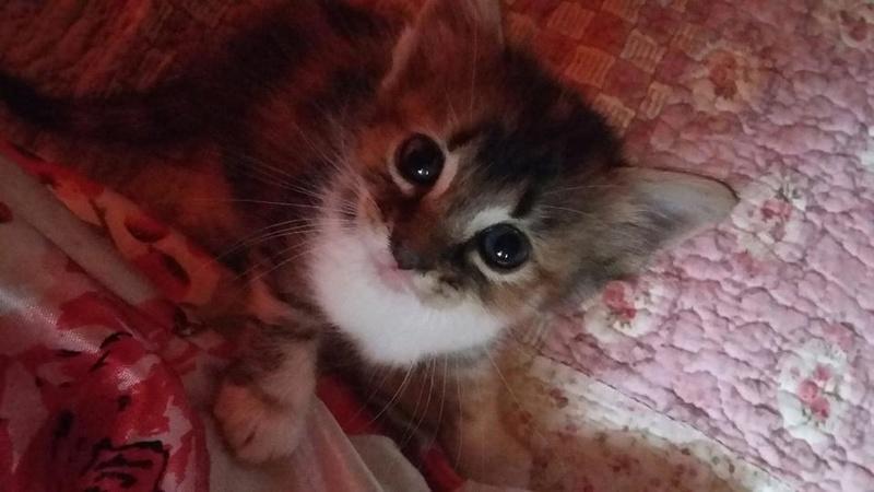 Ορφανά γατάκια που γλύτωσαν από φόλα! Υιοθετήθηκαν Ioz_10
