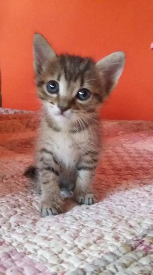 Ορφανά γατάκια που γλύτωσαν από φόλα! Υιοθετήθηκαν O10