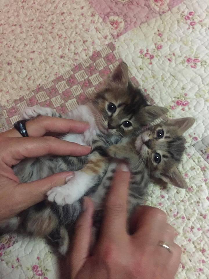 Ορφανά γατάκια που γλύτωσαν από φόλα! Υιοθετήθηκαν O11