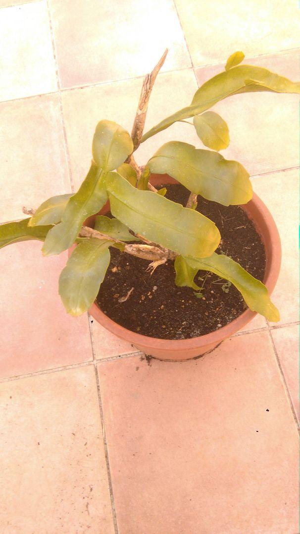 Plante mystère ! P1r11