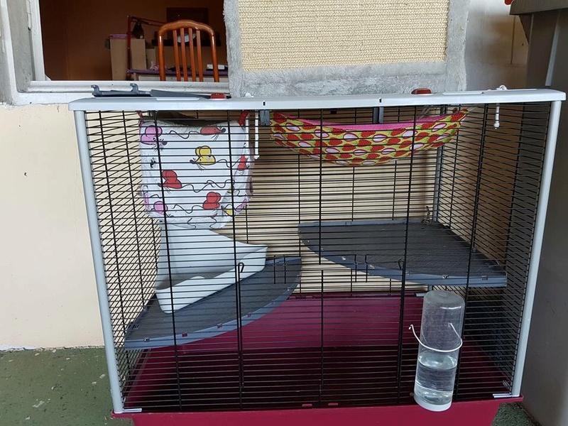 avis sur peu être la prochaine cage de mes rats Img_5511