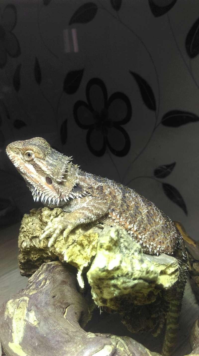 Mon petit nouveau Basile Imag0815
