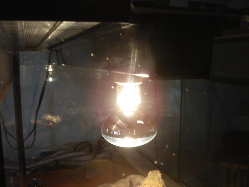 Installation complète du néon Dsc02325