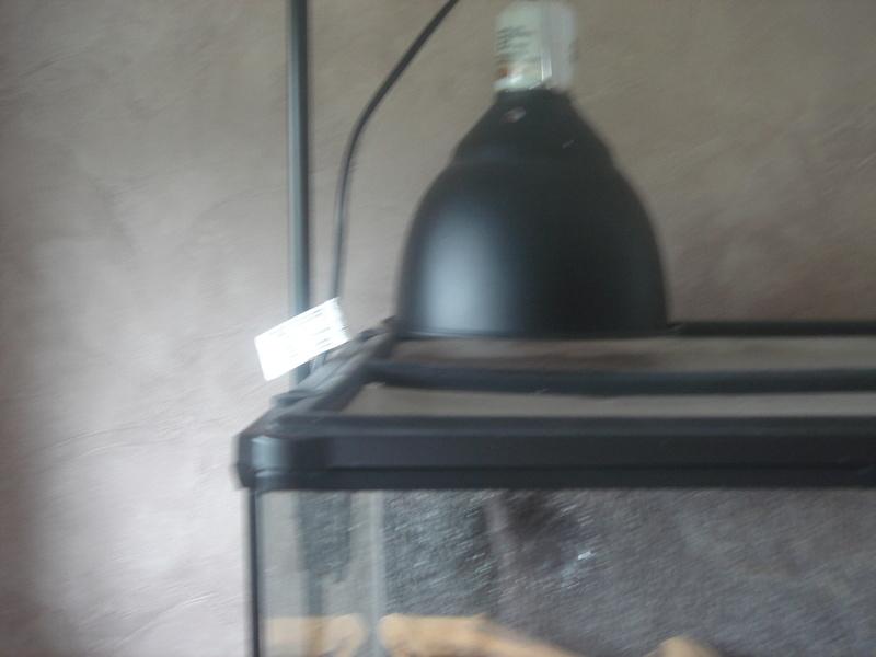 Installation complète du néon Dsc02327
