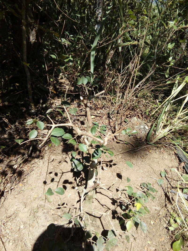 Ayuda para Identificar Especies Img_2015