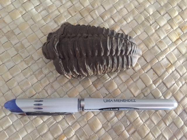Nos presentamos mis fósiles y yo desde Madrid Img_4213