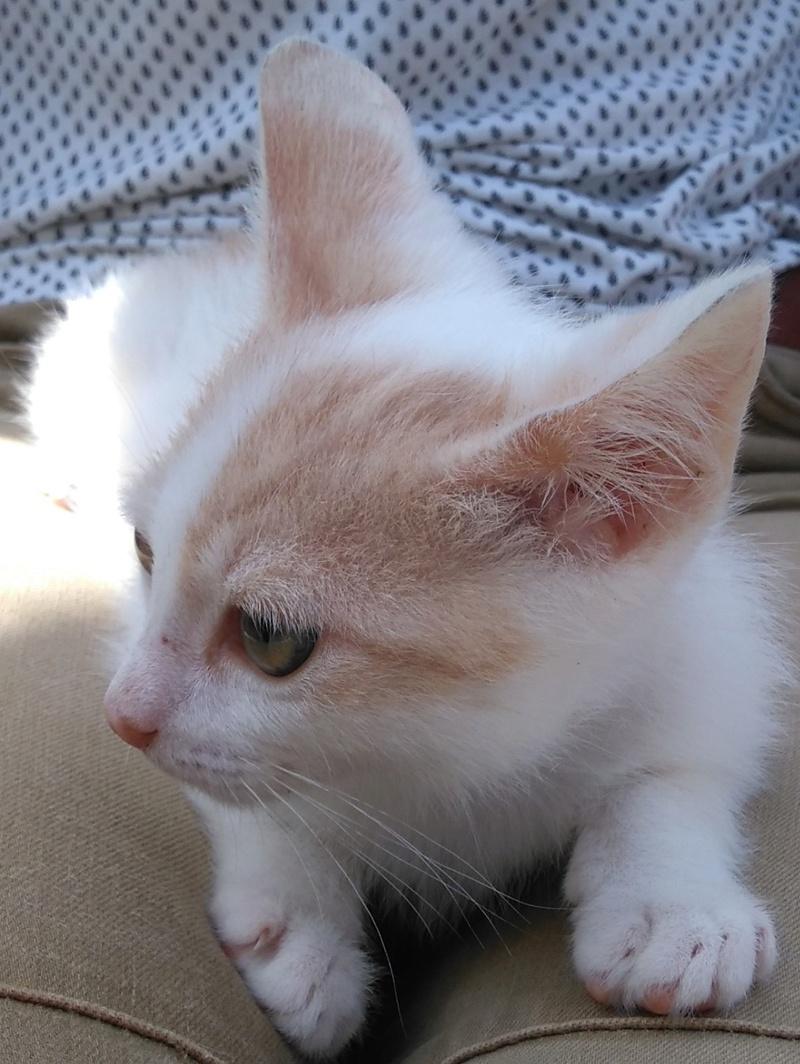 Des chats, encore des chats... - Page 17 Naoki_10