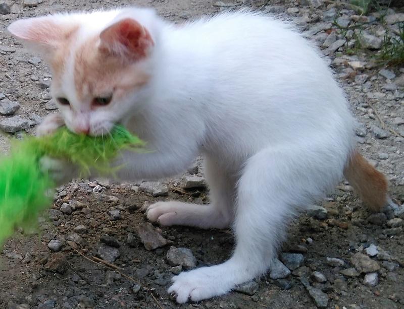 Des chats, encore des chats... - Page 17 Naoki_12